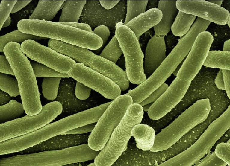 Microbiology Bacteria Magnified